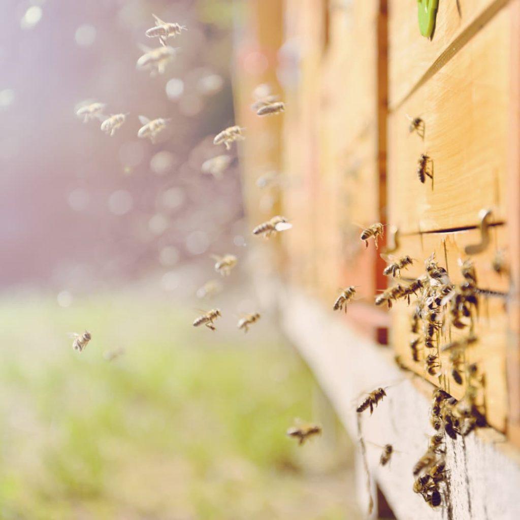 Le fruit des abeilles
