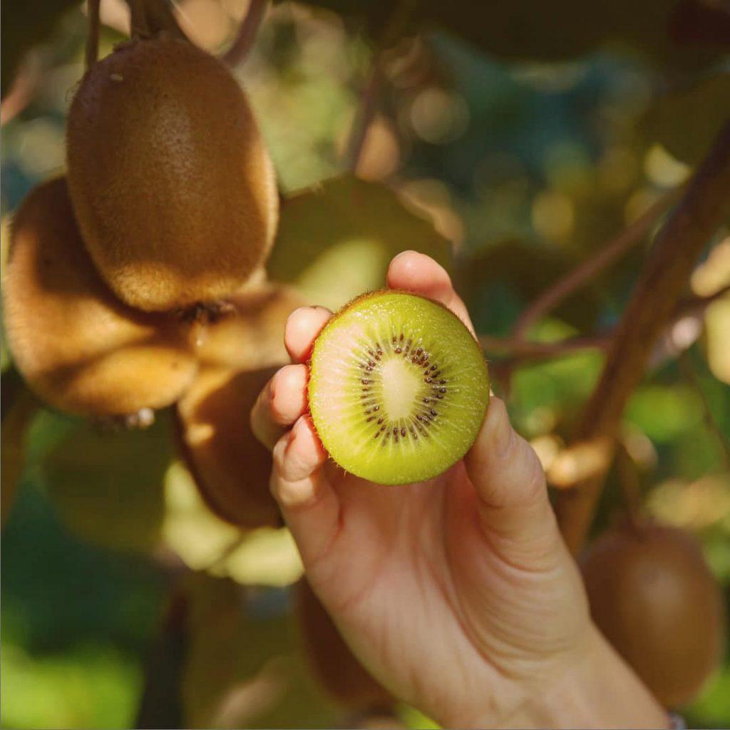 Un fruit exotique